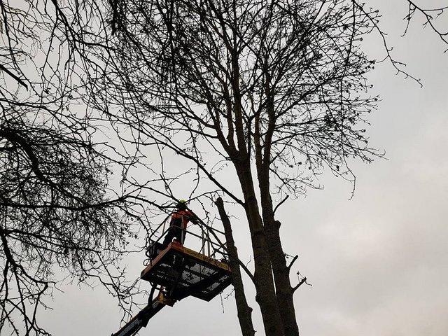Ash Tree Tree Surgery