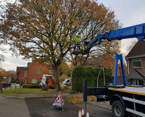 Oak Tree Surgery