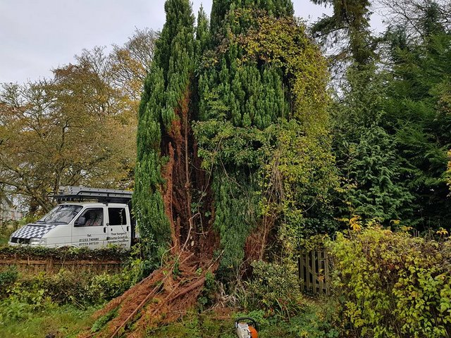 Large Garden Clearance