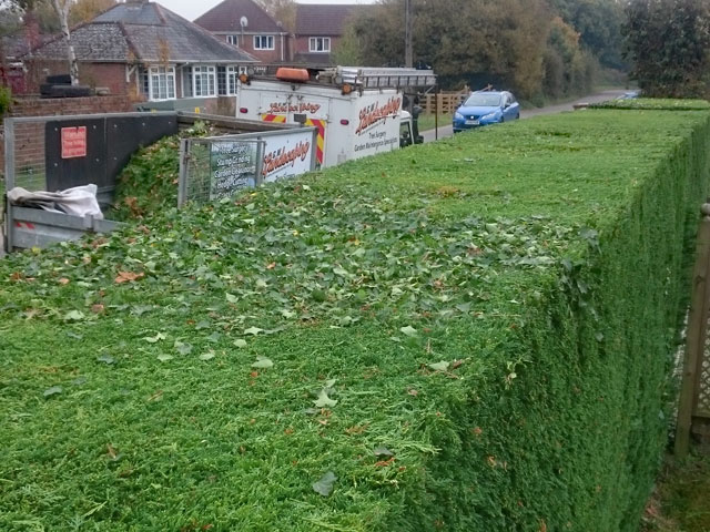 Hedge Cutting Maintenance