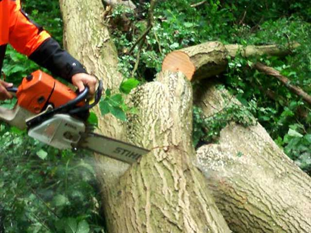Tree Surgeon at Work in Canterbury