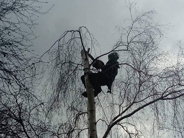 Kent Tree Surgeon