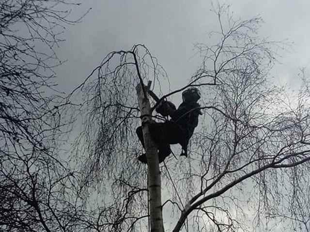 Local Tree Surgeons Kent