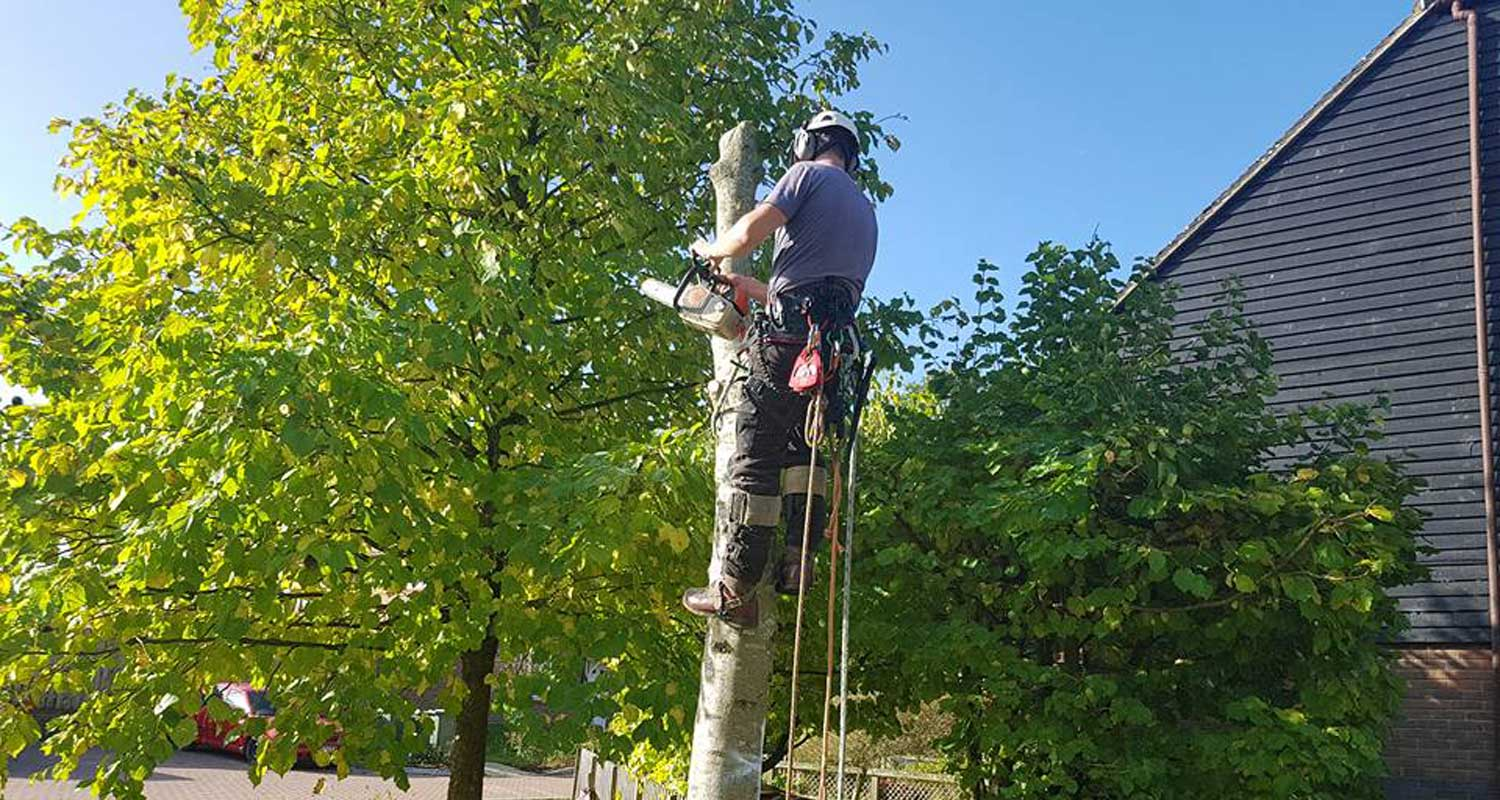 Tree Surgeons Canterbury